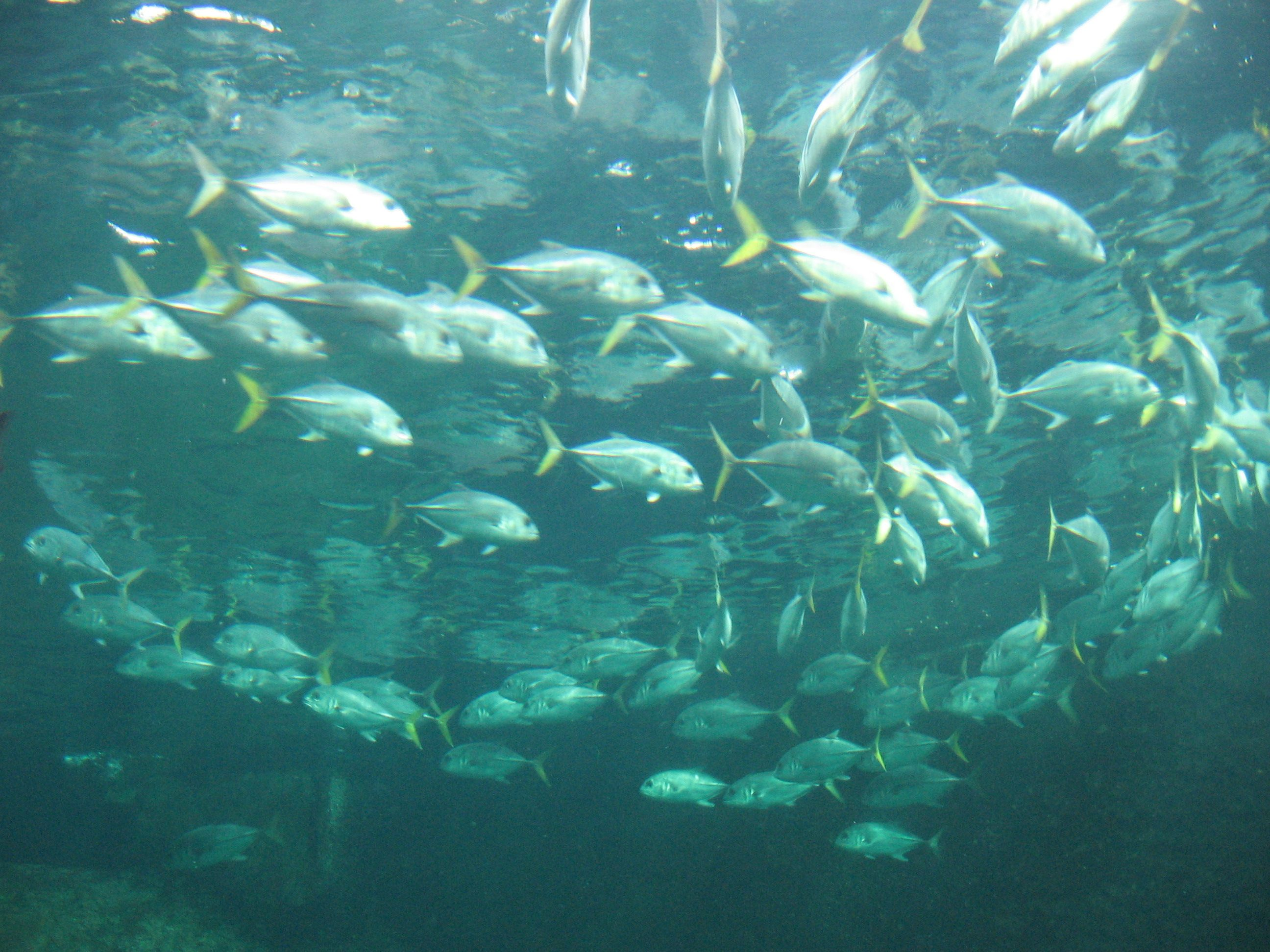 boulogne sur mer aquarium images