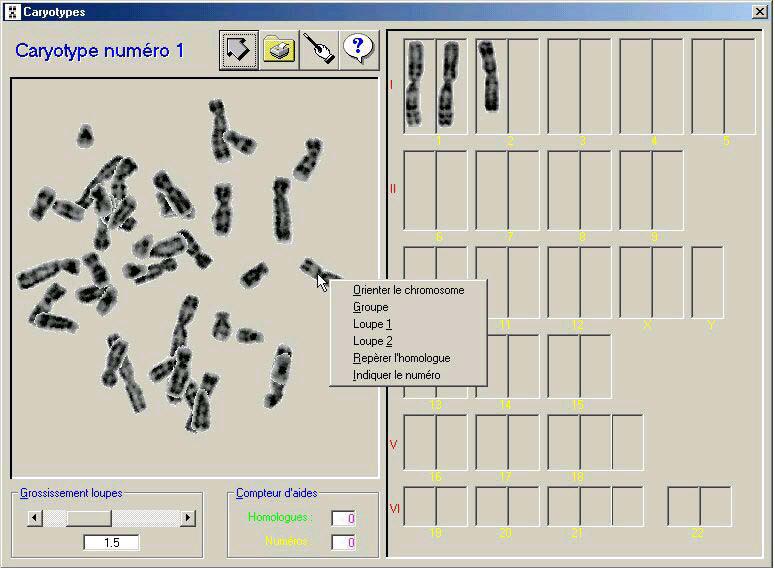 logiciel caryotype