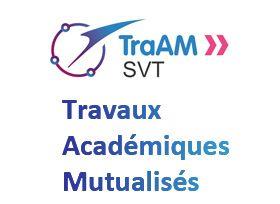Logo TraAM